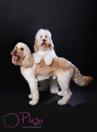 Cockrill dogs